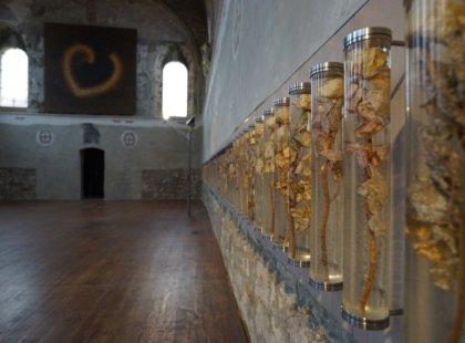 autentické stvoly růží, pryskyřice, dřevo, kov. <br /> Duchovní centrum Pražská křižovatka, (kostel sv. Anny)