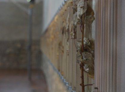 real rose stalks, resin, wood, metal, size 7m.  Prague Crossroads, Prague