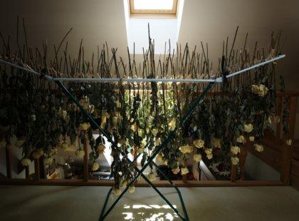 Sušení květů v atelieru, 2011 - 2013